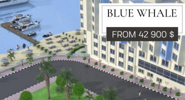 Blue Whale Beach